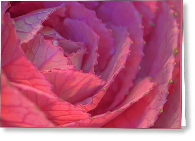 Ornamental Pink Greeting Card by Roy McPeak