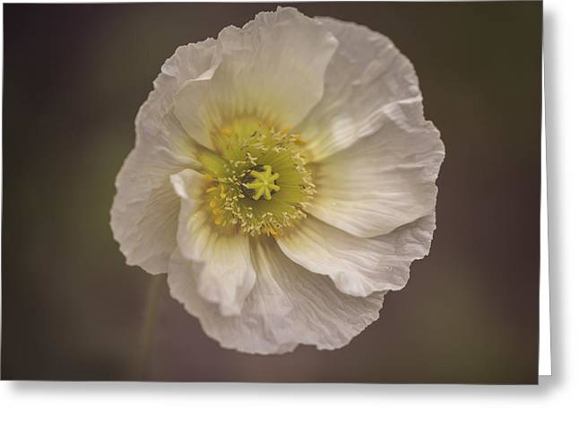 Ornamental Poppy Greeting Card by Thomas Young