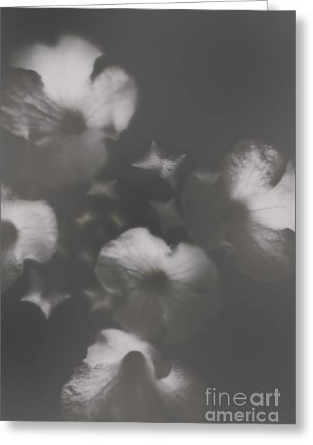 Ornate Colourless Weathered Wild Flowers Greeting Card