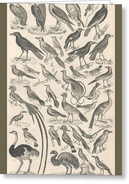 Ornithology Greeting Card