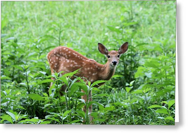 Orphaned Fawn Greeting Card by Carolyn Postelwait