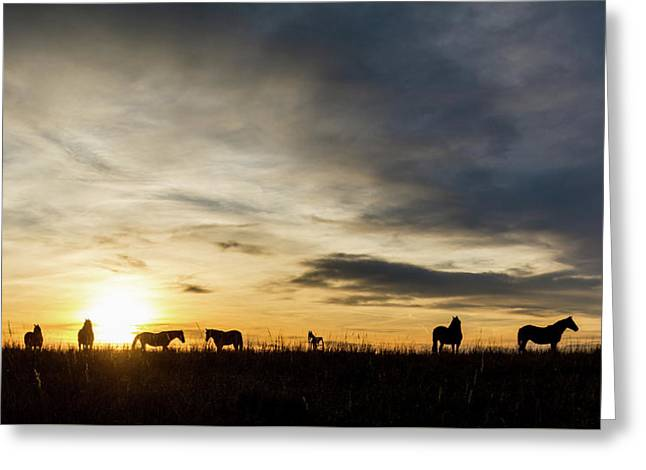 Osage Horses Greeting Card