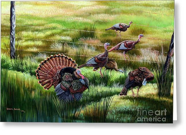Osceola Turkeys- Still The Boss Greeting Card by Daniel Butler