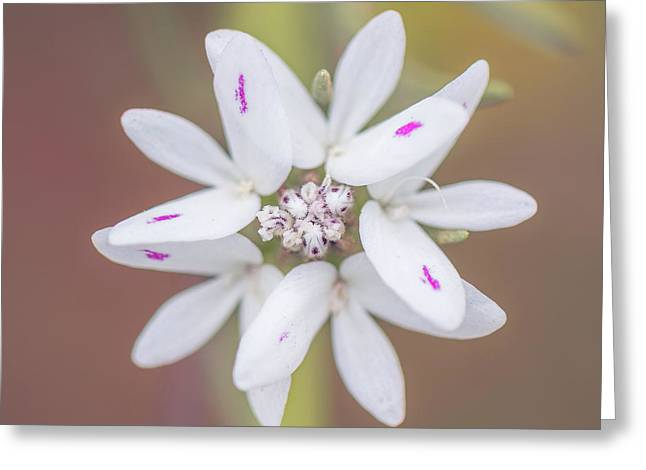 Greeting Card featuring the photograph Osmadenia Tenella by Alexander Kunz
