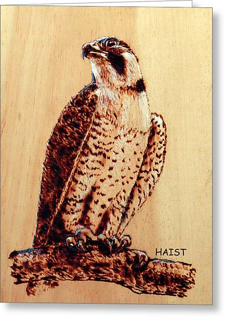 Osprey 2 Pillow/bag Greeting Card