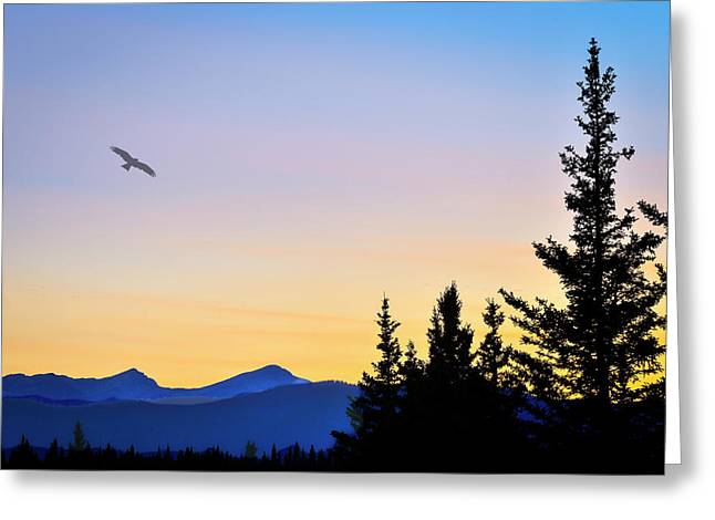 Osprey Against The Sunset Greeting Card
