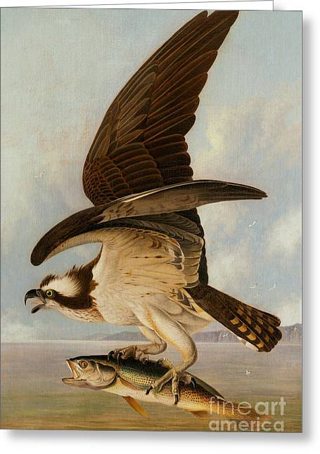 Osprey And Weakfish Greeting Card