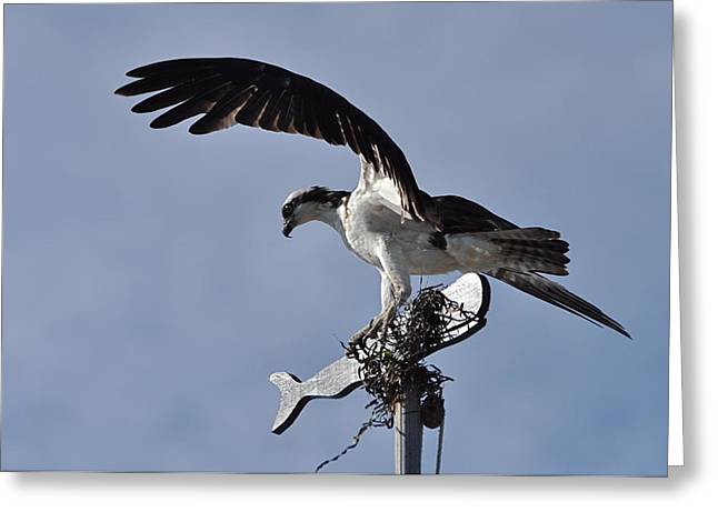 Osprey And Whale Greeting Card by Gerald Hiam