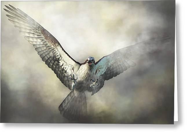 Osprey Greeting Card by Daniel Eskridge