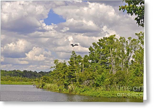 Osprey From Flight Greeting Card by Donnie Smith