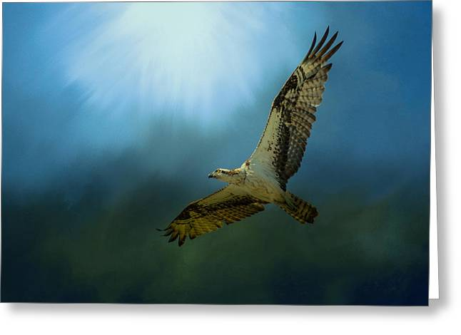 Osprey In The Evening Light Greeting Card