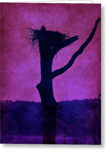 Osprey Nest Silhouette - Manasquan Reservoir Greeting Card by Angie Tirado