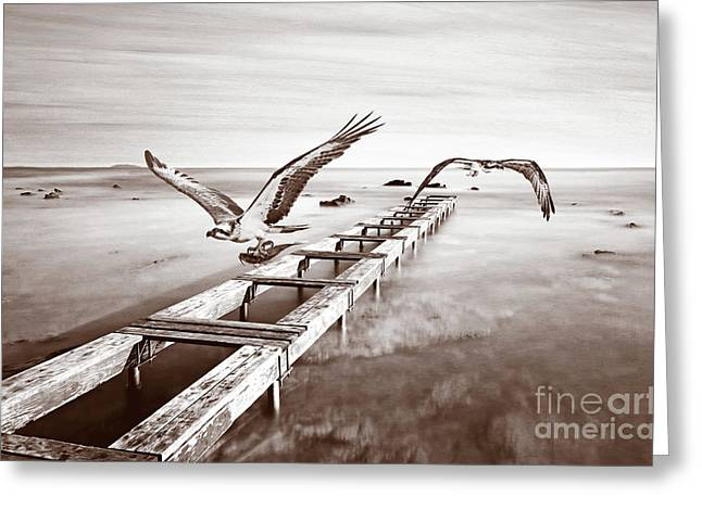 Osprey On The Move Bw Greeting Card