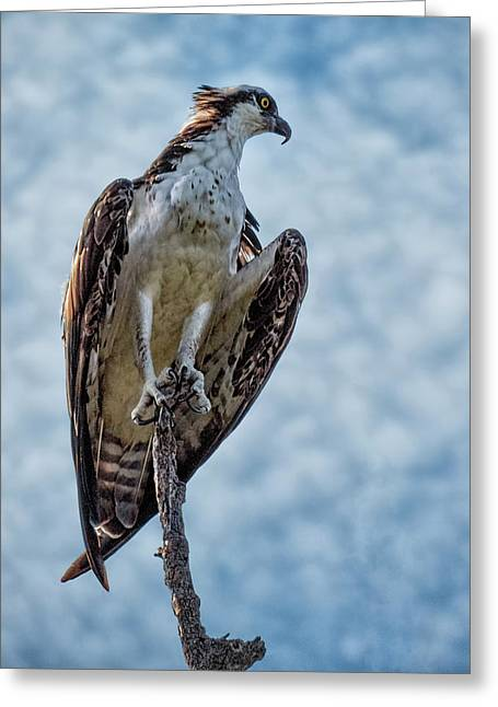 Osprey On Top Of The World #2 Greeting Card by Mitch Spence