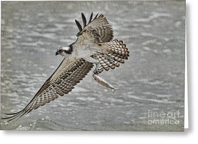 Osprey With Breakfast Greeting Card by Deborah Benoit