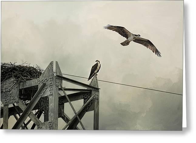 Ospreys At Pickwick Greeting Card by Jai Johnson