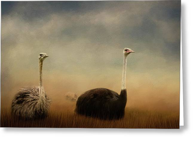 Ostrich Couple Greeting Card by Jai Johnson