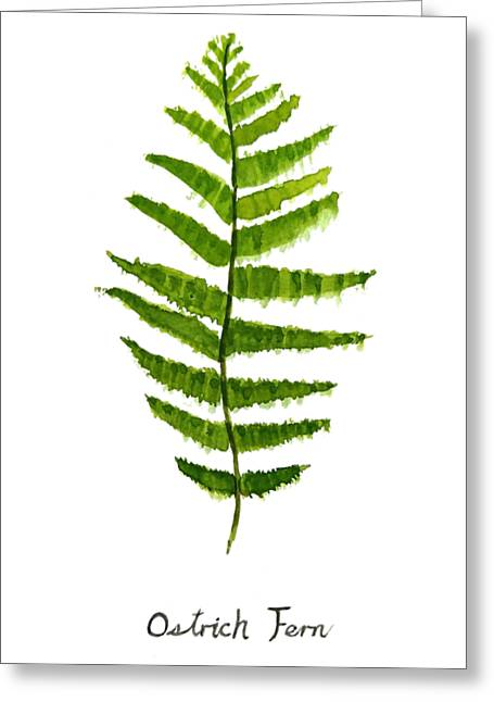 Ostrich Fern Greeting Card by Color Color