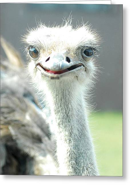 Ostrich Grin Greeting Card