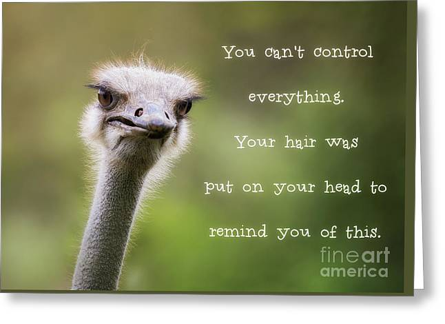 Ostrich Having A Bad Hair Day Greeting Card by Jane Rix