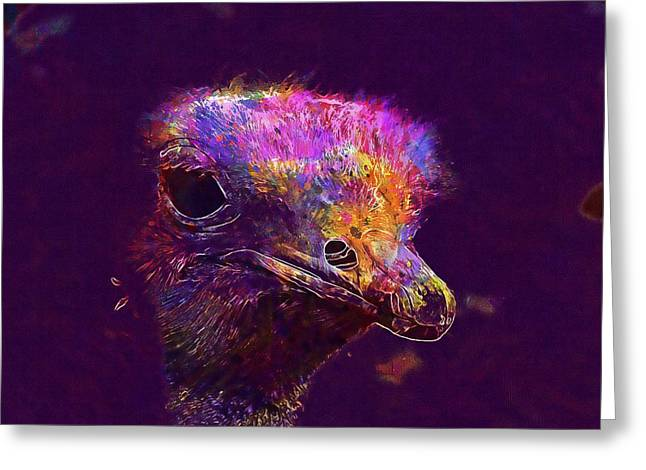 Ostrich Head Beak Feathers Nature  Greeting Card