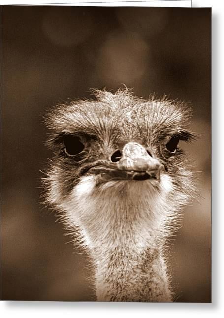Ostrich In Sepia Greeting Card by Tam Graff