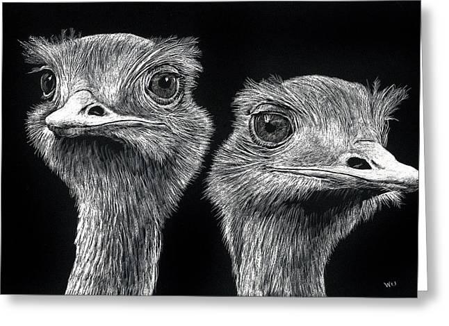 Ostrich Pair Greeting Card