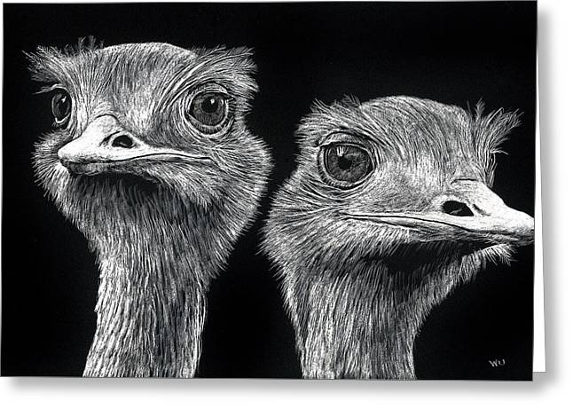 Ostrich Pair Greeting Card