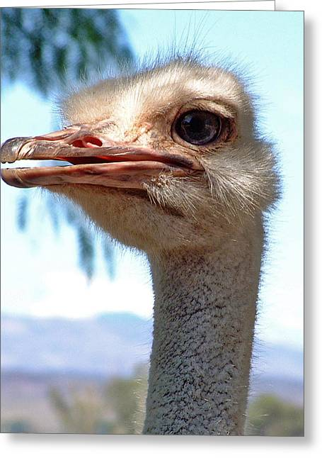 Greeting Card featuring the photograph Ostrich by Phil Stone
