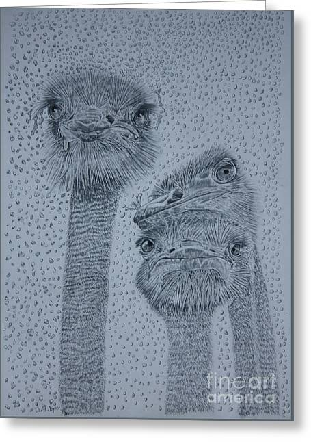 Ostrich Umbrella Greeting Card