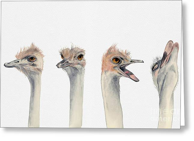 Ostrich Watercolor Painting Greeting Card