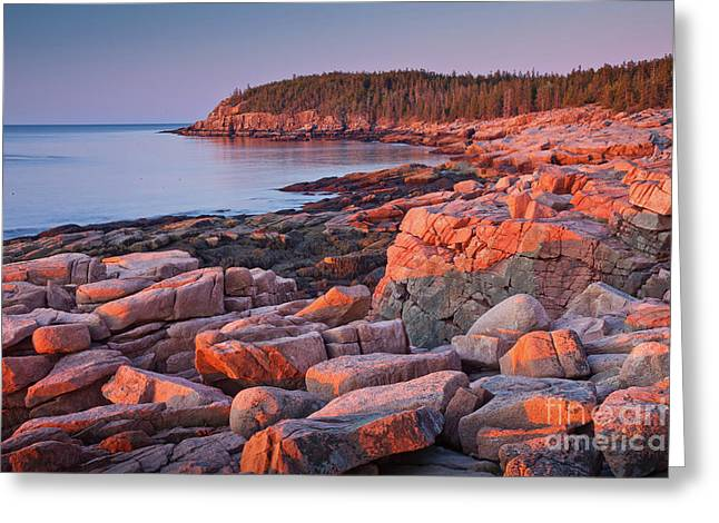 Otter Cliffs  Greeting Card by Susan Cole Kelly