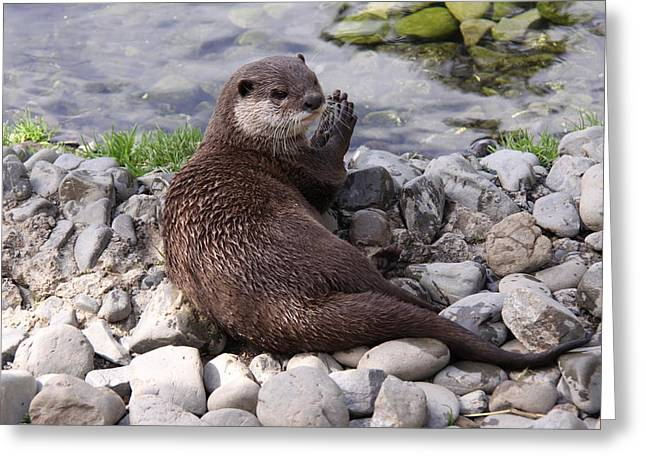Otter Playing With Rocks Greeting Card by Stephen Athea