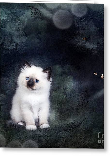 Our Cat World Greeting Card