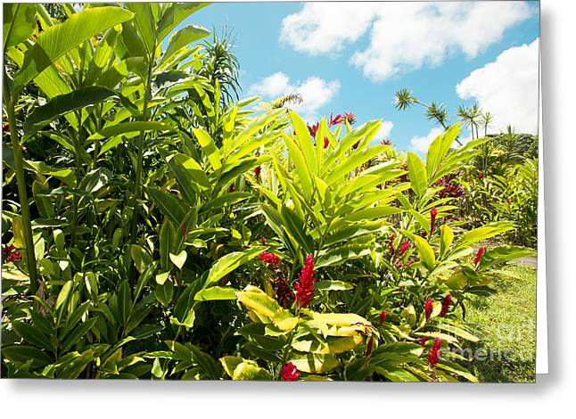Our Lady Of Fatima Shrine And White Coral Miracle Church Tropical Garden Wailua Maui Hawaii  Greeting Card by Sharon Mau
