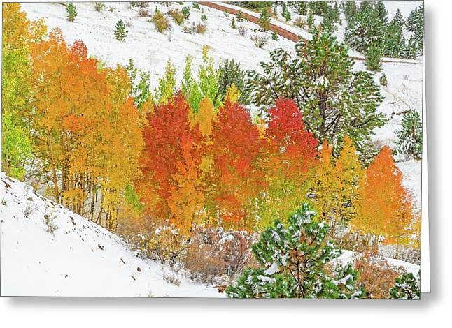 Our Winter Begins Around Mid October.  Greeting Card