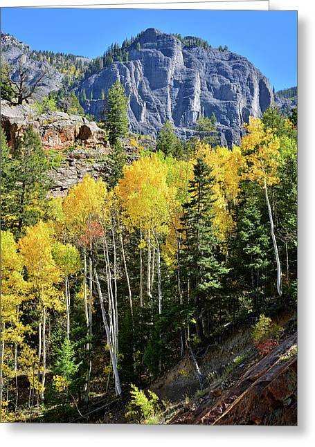 Greeting Card featuring the photograph Ouray Aspens by Ray Mathis
