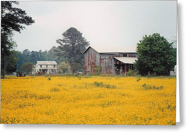 Out In The Country Greeting Card by Robert Boyette