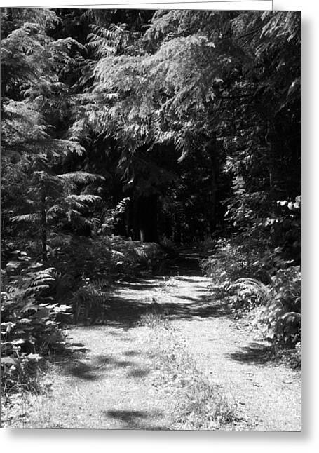 Out Of The Into The Dark Bw Greeting Card by Ken Day