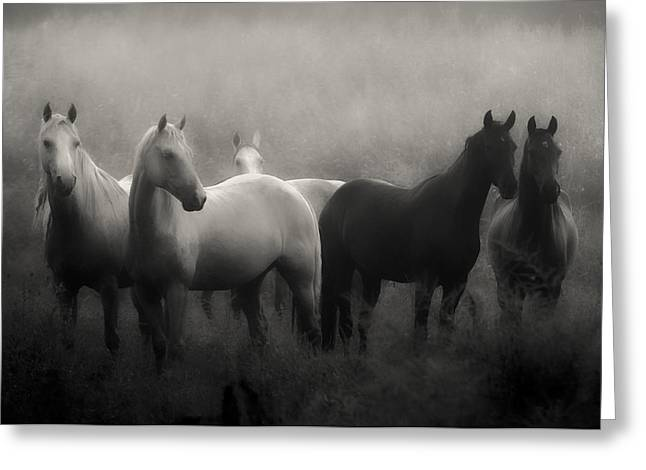 Black Greeting Cards - Out of the Mist Greeting Card by Ron  McGinnis