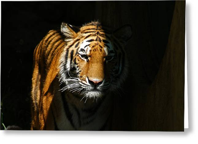 Out Of The Shadows Greeting Card by Ernie Echols