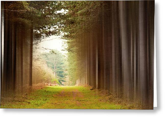 Out Of Woods Greeting Card by Svetlana Sewell