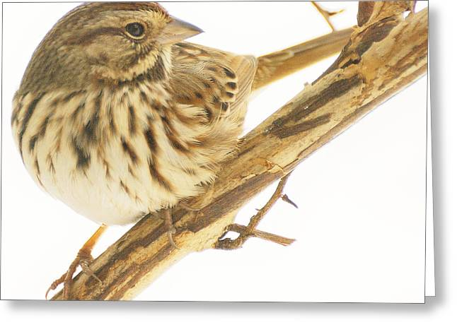 Out On A Limb Greeting Card by Richard Oliver
