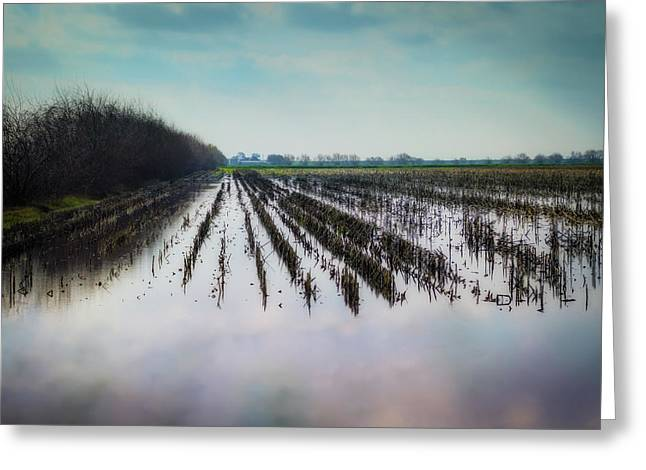 Out On The Delta Greeting Card by Terry Davis