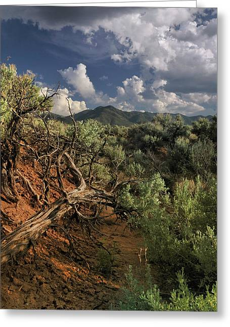 Out On The Mesa 2 Greeting Card