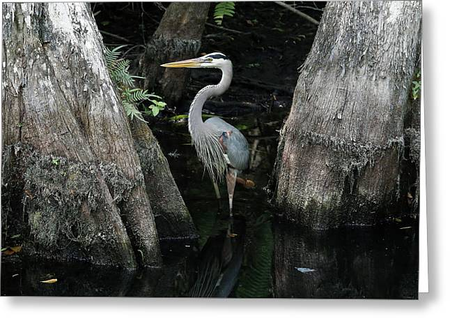 Out Standing In The Swamp Greeting Card by Lamarre Labadie