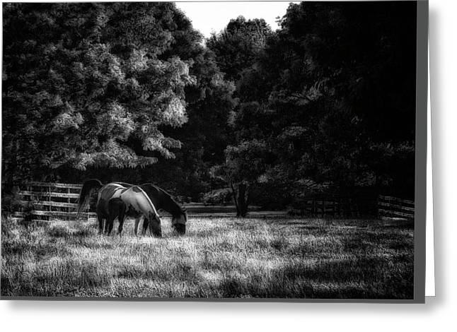 Greeting Card featuring the photograph Out To Pasture Bw by Mark Fuller