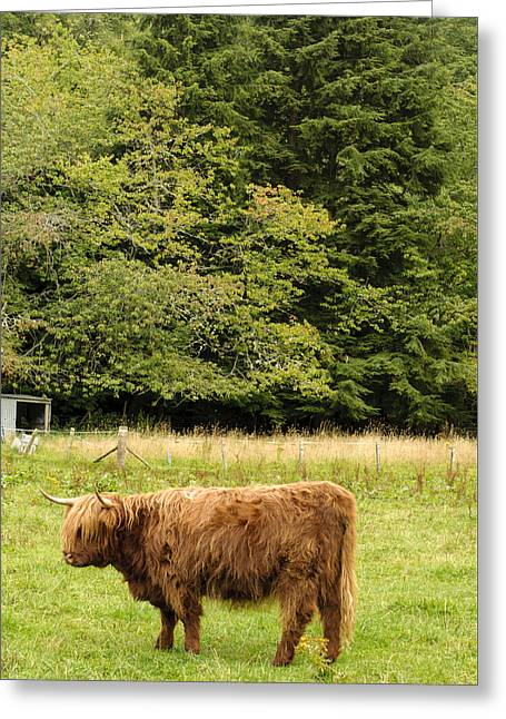 Out To Pasture Greeting Card by Christi Kraft