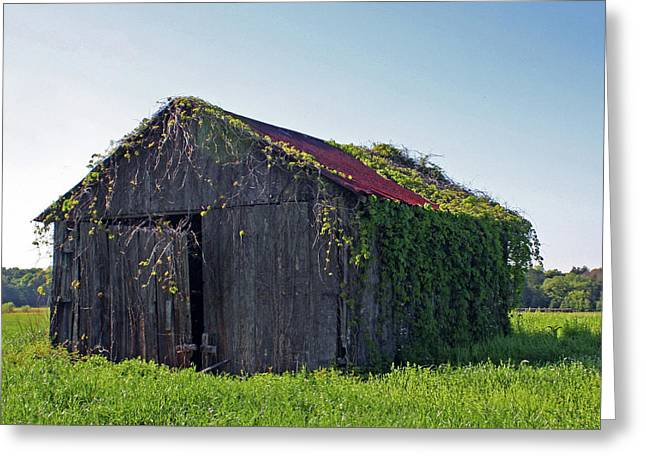 Old Barns Greeting Cards - Out To Pasture Greeting Card by Joy Tudor