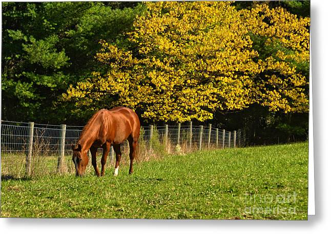 Out To Pasture Greeting Card by Kathy Jennings